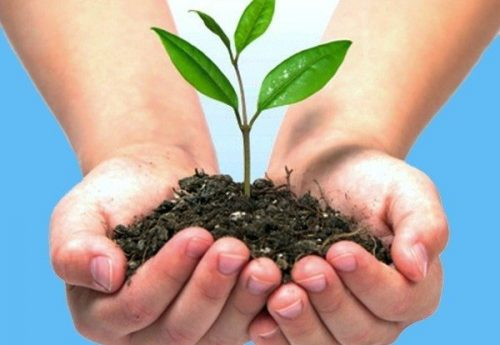 manos de niño sosteniendo una plantita